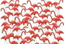 Flamingos / by Kylie Hodges