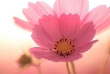 Flowers / Nice pictures of flowers makes me happy! / by Mariette Budel