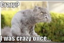 Crazy Cats / by Crystal Zwetzig