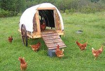The Homesteader / ideas for the farm and homestead
