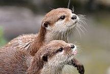 Otter-ly Happy