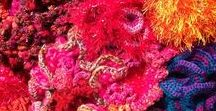 Coral Reef Crochet / A collection of Coral Reef Crochet.