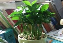 Indoor Plants / by Kristin Yates