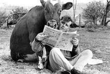 Cows-Bessie Molula