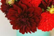flowers, arranged / by Kelsey Clark