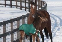 Horses (Jessie)