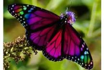 Away they flutter  / Butterflies and memories