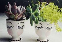 Terrariums & Houseplants / by Lacey Dreyer