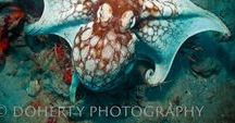 Sea Critters / Photos and facts of various underwater critters around the world.