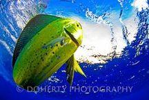 Wildlife Photography / Wild.