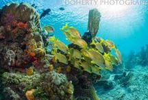 Reefscapes / Pictures of coral reefs.