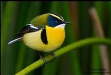 Birdie, Birdie, in the Sky