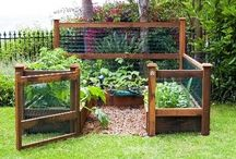 Garden Ideas / by Nichole Whelpley
