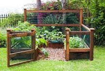 Garden Ideas / by Nichole Whelpley