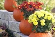 Fall/Thanksgiving / by Melanie E