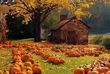 Autumn (2) / by Beverly Lett