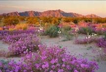 Arizona / by Beverly Lett