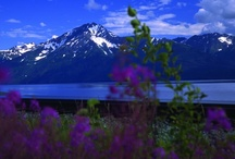 Alaska / by Beverly Lett