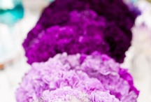 PURPLE!!! / The color of royalty...enough said!