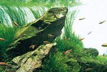 Aquascape / Freshwater / Saltwater #aquascaping #plantedaquariums #fish #marine / by Edel