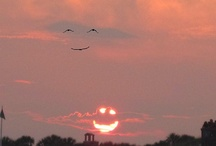 Makes me smile / by Shannon Ochs