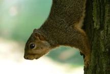 Squirrels! / by Marcia Shaffer Bane