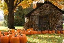 Celebrate-Halloween / by Stephanie