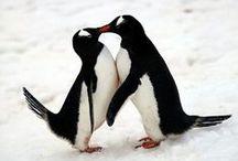 Penguins / Penguins are my Spirit Animal