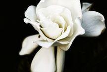 Bloom + Grow / by Bri Suitt