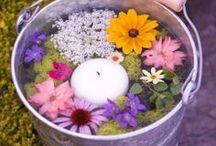 Garden Bliss / by Erica Wilson
