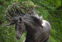 PONEHS / All pictures of ponies and horses <3