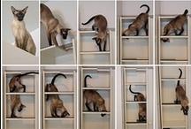 Ideas / by Animal Arts