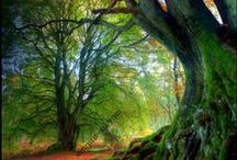 Enchanted Forest / Creation by God