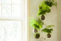 If you have an (indoor) garden and a library you have everything you need... / Indoor gardening & houseplants