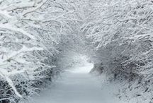 Snow Delights / cold and white