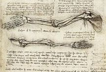 skeletal / References of skulls and skeletons
