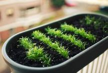 Container Gardening / Tips and tricks for container gardening. You don't need a huge backyard to grow your own food!