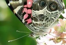 Butterflies / Butterfly Beauty