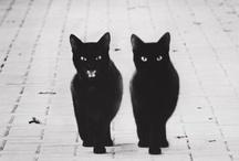 Feline / I love 'em. / by The Boston Fashionista