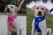 Dog-E-Glow Products / by Dog-e-Glow