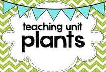teaching: plants