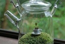 Terrariums and Mini Gardens / by Larisa Baldwin