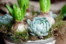 Succulents / by Larisa Baldwin