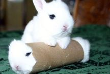 Bunnies & other cuties! / Cute little animals !! >< / by Méline Briciní