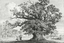 Tree / by MacWhirr