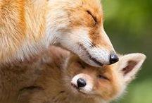 Animals / love them / by Eva Parisianstyle.nl