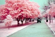 Colorful wonderful