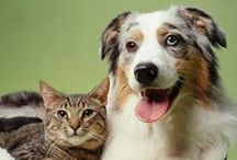Animal Friends / All things pet related.