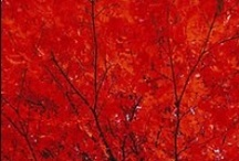 Really Red / by Kathy Gray Carter