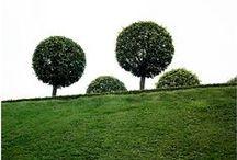 - garden -